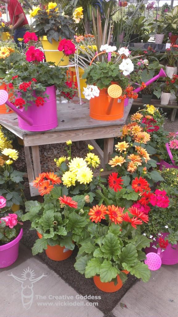 Watering-can-flower-pots