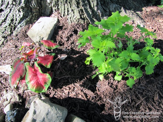 Shade Loving Plants for the Fairy Garden